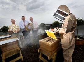 Apiary AIB Bank Centre