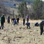Tree planting with local school children
