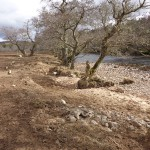 New fencing to protect the river