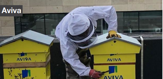 aviva apiary with bees and beekeeper
