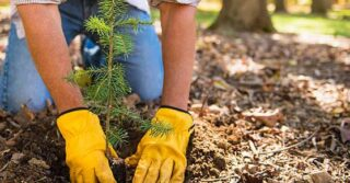 NortonLifeLock Launches 2021 Environmental, Social, and Governance ESG Report -Hand with yellow gloves planting tree